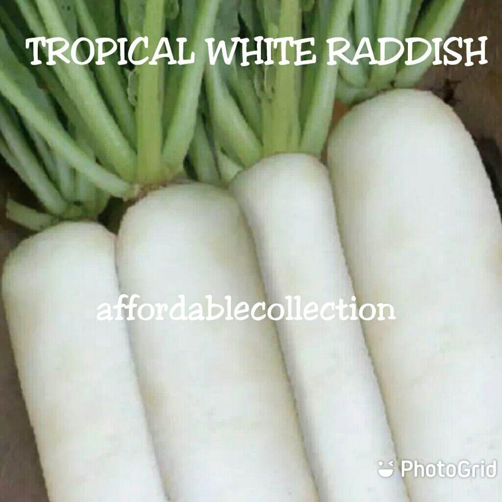 (Seed) Tropical White Radish Carrot  Seed / Biji Benih Sayur Lobak Putih Tropika